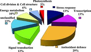 Cell Cycle Pie Chart Pie Chart Illustrating The Assignment Of The Identified