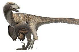 Raptor 3d model available on turbo squid, the world's leading provider of digital 3d models for prehistoric creatures. Did Velociraptors Hunt In Packs Jurassic Park May Be Wrong Deseret News