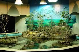 Fun Fish Tank Decorations Luxury Aquarium Decorating Aquarium Design Pinterest House