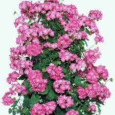 Small Picture Garden Design Garden Design with Wyeplants The Climbing Plant