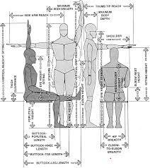 Anthropometric (body) measurements of most use to designers of interior  spaces (Panero,