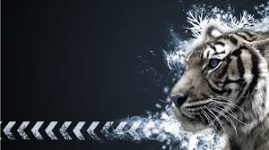 white tiger desktop hd wallpapers