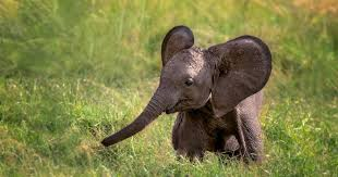 African elephant calf is born in Mexico during pandemic, they call it  'Zoom' | Web24 News