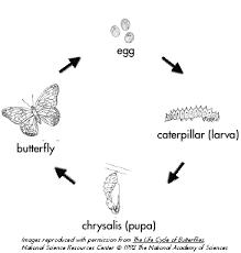 Dragonfliesandbutterflies