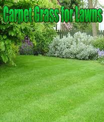Quiet Corner Carpet Grass For Lawns Quiet Corner