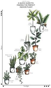 perfect office plants. A Quick Guide To Finding The Perfect Indoor Plant How Choose Right So It Doesnt Die Interior Plants Good Office Cubicle Best