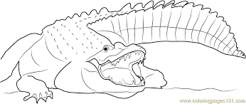 Small Picture Adult Nile Crocodile Coloring Page Free Crocodile Coloring Pages