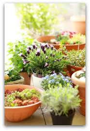 How To Design Your Small Container Garden  Small NotebookContainer Garden Plans