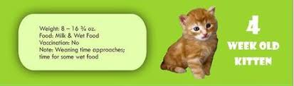 Kitten Growth Chart Infographic Kitten Cat Growth Chart By Age Weight And Food