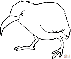 Small Picture Kiwi coloring page Free Printable Coloring Pages