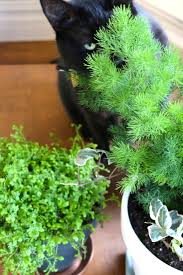 Notwithstanding, its entirety is still toxic. Ask The Expert Will A Poisonous Plant Really Kill Your Pet Gardenista