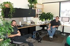 office greenery. Office Plants With A Heart Of Green Greenery F