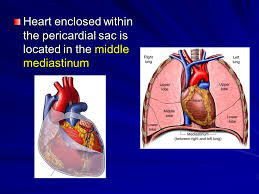 pericardial sac pericardium heart dr zeenat zaidi pericardium heart dr zeenat