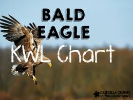 bald eagle template bald eagle writing template kwl chart graphic organizer by