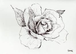 Small Picture Drawn rose pen and ink Pencil and in color drawn rose pen and ink