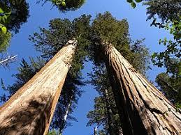 Adresas schlagfeld 6 bodenwöhr vokietijoje. Calaveras Big Trees State Park Wikipedia