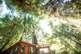 tree house pictures. Rustic Treehouses Tree House Pictures T