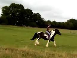 horses galloping in a field.  Galloping Skibu And Lilly GallopingCantering Accross The Field   Horse Riding  Elvenking  Swallowtail YouTube With Horses Galloping In A