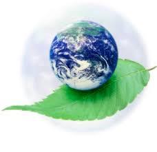 Hasil gambar untuk Green Living Tips For A Better Environment
