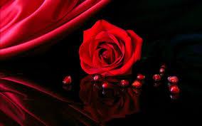Beautiful Red Rose Wallpaper Hd 3d ...