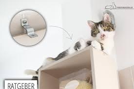 Katzensichere Wohnung Was Muss Ich Beachten Teil 1 Ratgeber