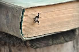 Как подготовиться к защите кандидатской диссертации Статьи  необходима защита кандидатской диссертации Старая книга