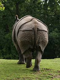 Image result for rhinoceros