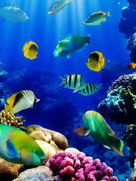 Aquarium 3D Tropical Fish Wallpaper ...