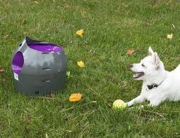 automatic ball thrower for dogs diy