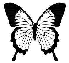 drawing butterfly pictures.  Drawing Drawingbutterfly_53_mountain_blue With Drawing Butterfly Pictures