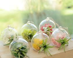 small hanging glass vase air plant terrarium