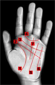 Резултат с изображение за линиите на дланта