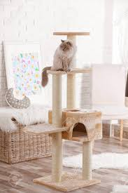 Cat Tree Designs Free Cute Kitty On Cat Tree At Home