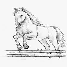 Cavalli Da Colorare Per Bambini Con Disegni Di Cavalli Da Stampare E