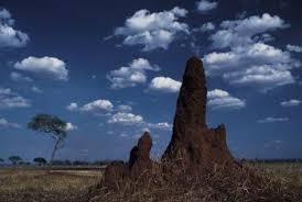 natural termite killer. Modren Natural Some Termites Build Mounds With Natural Termite Killer R