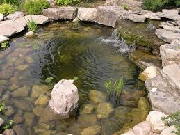 photographs of a koi pond build
