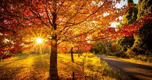 These Are The Best Places To See Autumn Leaves In And Around Sydney   Urban List Sydney