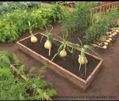 above ground vegetable garden. Above Ground Vegetable Garden Boxes The Gardening How To Build U