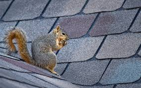 is it possible to squirrel proof your garden