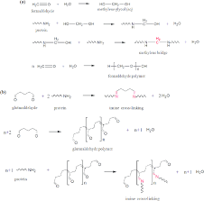 Cross Linking Reactions Of Protein Macromolecules With