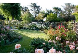 Small Picture Rose Place Garden Design Rose Notes