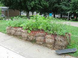 straw bale gardening offers options for