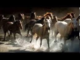 wild horses running. Modren Horses BEAUTIFUL WILD HORSES RUNNING On Wild Horses Running YouTube