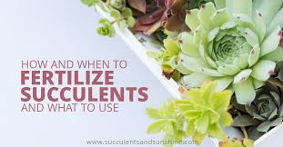 Learn How To Fertilize Succulents Succulents And Sunshine