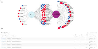 Interactive Venn Diagram Generator Frontiers Divenn An Interactive And Integrated Web Based