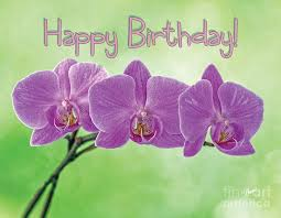 happy birthday pink and green happy birthday pink orchids photograph by alana ranney