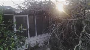 Act of God or negligence? Answer determines toppled tree claim ...