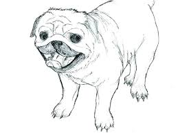 pug coloring page ideal pug coloring pug coloring pages to print pug coloring pages photo pug pug coloring page