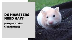 do hamsters need hay is hay ok