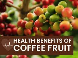 In a study of twenty healthy young subjects (aged 25 to 35), a single dose of encapsulated coffee fruit concentrate (100 mg) increased peripheral serum bdnf by a staggering 91% at 60 minutes and 66% at 120 minutes compared to baseline levels. What Is Coffee Fruit Coffee Berry Its Health Benefits Side Effects And Ways To Use Boldsky Com